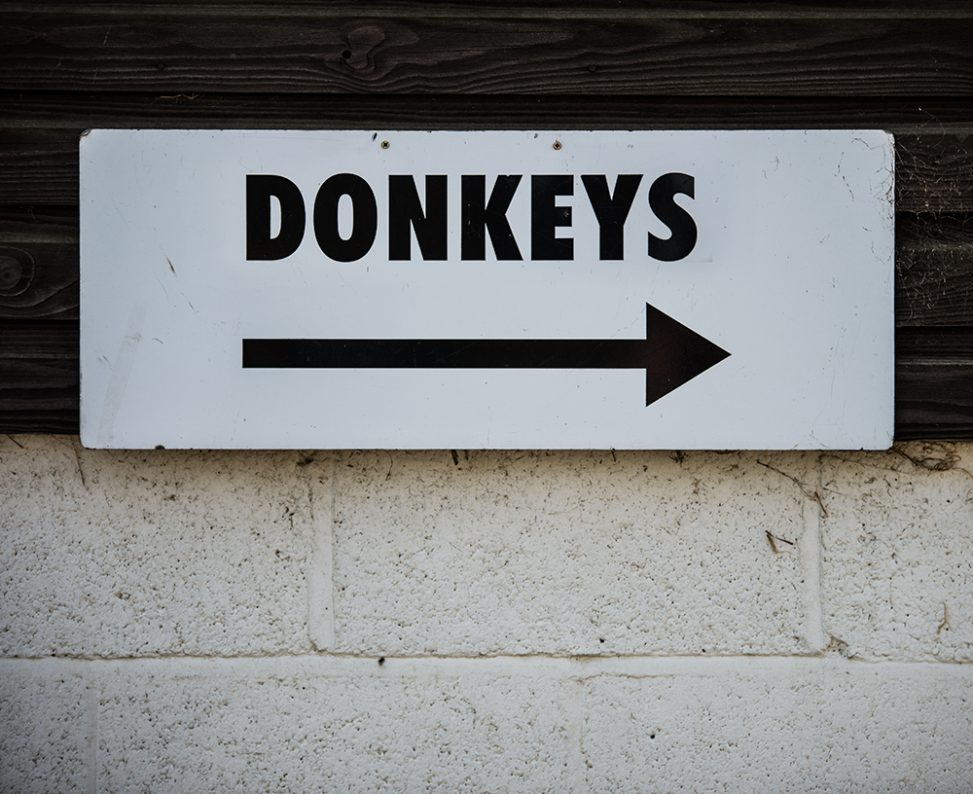 "A sign saying ""Donkeys"""